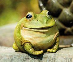 Freddy The Frog Portly Medium