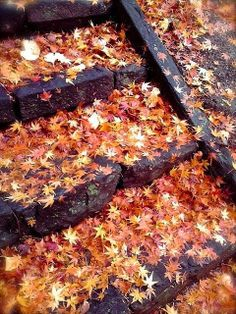 We love this stone stairway that's covered in fallen leaves! All the warm fall colors of the leaves contrasted w/ the dark stone are stunning. Just the epitome of fall! Seasons Of The Year, Best Seasons, Fruits Decoration, Autumn Cozy, Autumn Fall, Autumn Aesthetic, Nature Aesthetic, Hello Autumn, Samhain
