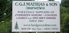 Leylandii, Laurel and Evergreen Hedges for sale from http://www.hedgesonline.com  As growers we have more than 30 years experience of supplying Hedges for Privacy including Leylandii, Laurel, Yew, Box hedging, Holly, Beech, Hornbeam, Photinia 'Red Robin', Thuya Atrovirens – Red cedar, Lonicera nitida. We despatch to most parts of the UK and now you can buy direct from us at our sensible prices!