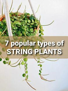 7 POPULAR TYPES OF STRING PLANTS. Hanging succulents. Garden plants. Indoor plants. Houseplants. Ornamental plants. Plantsbank. Gardening