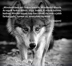 Farkas. Teen Wolf, Husky, Life Hacks, Motivational Quotes, Romance, In This Moment, Animals, Hair, Romance Film
