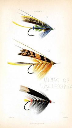 Design - Objects - Salmon flys for fly fishing - yellow black stripe You can get so many flies at www.mauricon.com..Have a browse there.