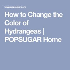 How to Change the Color of Hydrangeas | POPSUGAR Home