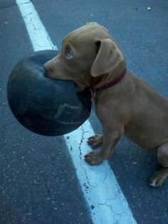 That's not my ball!!!!