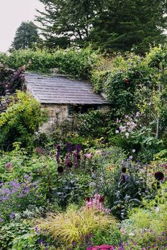 Landscape designer has spent 15 years developing her own Somerset garden, unifying two distinct halves within a valley, filling it with year-round colour and cultivating a sense of comfort and joy.