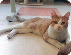 Bello is looking for a loving home!