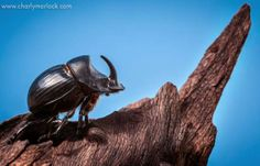 Amazing Facts – Lets Learn Something I Don T Know, Macro Photography, Fun Facts, Insects, Hate, That Look, Animals, Collection, Animales