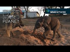 This Sick Baby Elephant Was Rejected By His Herd. But Watch Who Shows Up Behind The Sand Pit… | AmazingPandPh