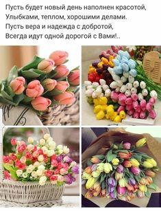 Фиолетовые Тюльпаны, Белые Тюльпаны, Доброе Утро, Слова, Творческий, Сад, Синие Ногти, Весна, Цветы