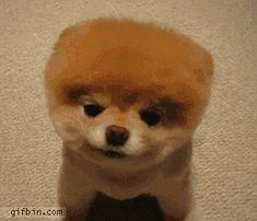 sweey puppy gif   cute puppy