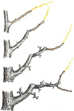 rez jablone Bonsai Fruit Tree, Bonsai Tree Care, Mini Bonsai, Fruit Trees, Bonsai Pruning, Tree Pruning, Garden Landscape Design, Garden Landscaping, Tree Diagram