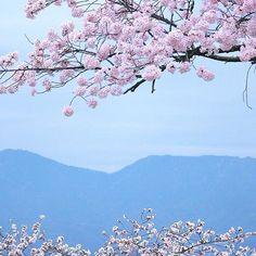 【loveph0t0o】さんのInstagramをピンしています。 《l a n d s c a p e . - 春 -  #photography#photooftheday#photo#beautiful#amazing#landscape#nature#naturelovers#instagood#instagram#instalike#instadaily#icu_japan#lovers_nippon#japan#vsco#vscocam#vsconature#canon#mountain#風景#春#桜#さくら#カメラ女子#ファインダー越しの私の世界#おしゃれさんと繋がりたい#写真好きな人と繋がりたい#過去picですが》