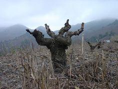 The #Priorat essence. Spanish wine region