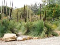 Australian gardeners should select native plants for rock gardens. Native plants are usually easier to grow and more pest resistant than exotics. Australian Garden Design, Australian Native Garden, Australian Plants, Modern Garden Design, Landscape Design, Landscape Architecture, Rock Garden Plants, Garden Trees, Baumgarten