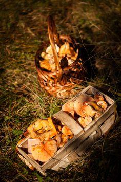 jesienne grzybobranie | Święto Rydza