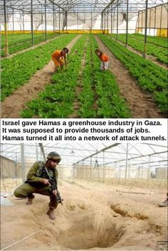 Israel gave Hamas a greenhouse industry in Gaza. It was supposed to provide thousands of jobs. Hamas turned it all into a network of attack tunnels.