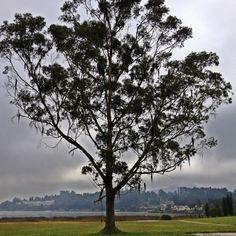 Árbol solitario en el Lago Sochagota (Paipa).