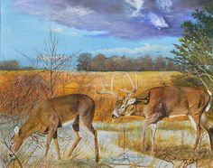 Rut - Whitetail Deer by Alvin Hepler Wildlife Paintings, Wildlife Art, Deer Art, Moose Art, Whitetail Deer Pictures, Terry Redlin, Deer Drawing, White Tail, Beautiful Paintings
