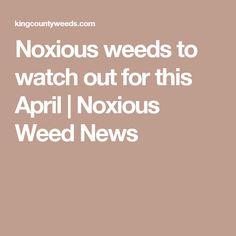 Noxious weeds to watch out for this April | Noxious Weed News