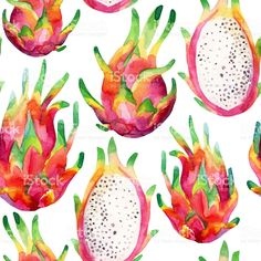 Watercolor dragon fruit seamless pattern on white background royalty-free stock vector art