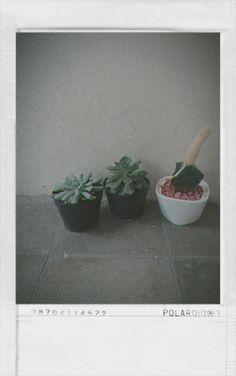 Plants kaktus tropis