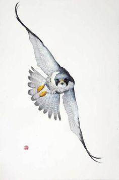Peregrine Falcon (Unframed)