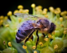 Bee Pictures, Julia, Bee Keeping, Bugs, Insects, Honey, Cottage, Photos, Animals
