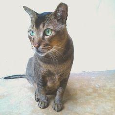 What am I doing with my kitty life? . . . #cats... Follow us on Instagram :D #cats #cat #catlover #lovecats #funny #fun #cute #socute #feline #felines #felinefriend #fur #furry #paw #paws #kitten #kitty #kittens #kittycat #kittylove #fluffy #fluff