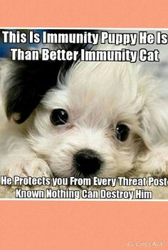 I think immunity cat and immunity dog should work together and stop the chain mail Memes Humor, Cat Memes, Funny Memes, Animals And Pets, Funny Animals, Cute Animals, Baby Animals, Funny Shit, Hilarious