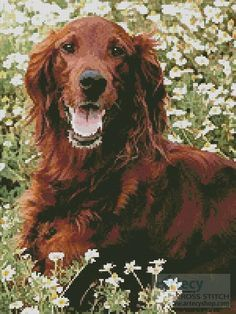 Irish Red Setter 2 Cross Stitch Pattern http://www.artecyshop.com/index.php?main_page=product_info&cPath=1_7&products_id=228