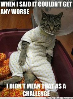 65 Best Cat Memes Images Crazy Cats Funny Animals Cut Animals