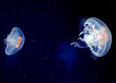 I want my own jellyfish :)