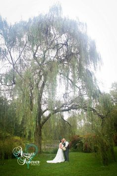 Bride and groom under beautiful weeping willow at Echo Hollow Lodge