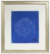 Art Gallery at Maine Cottage | Blue Coral 2