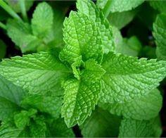 8 beneficios de las hojas de menta para tu piel
