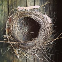 Nest by stephensheffield on Etsy