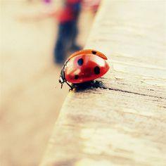 Pure Cute Ladybug Beside Wood #retina #iPad #Air #wallpaper