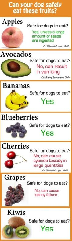 Fruits Safe To Share With Your Dog   Jodeze Home and Garden