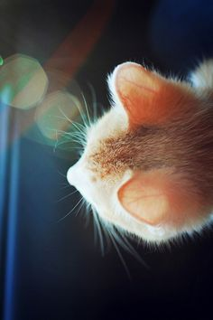Curiosity Killed the Cat or ???
