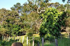 Fazenda / Sítio com 9 Quartos à Venda, 1600 m² Estrada da Barra J. Alves…