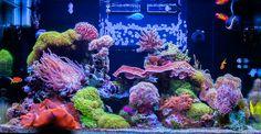 Amazing Reef Tank