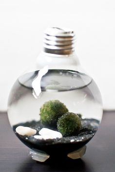 toutes les étapes pour transformer une ampoule en aquarium