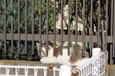 cats_2013-11-30_1