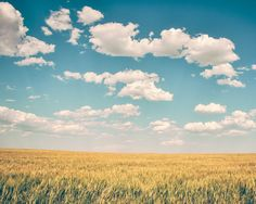 TITLE: Spacious Skies  The wide open wheat fields of Northern Montana sway in the warm winds of a summer day, under a big blue sky. ✭ This photograph is available as a photo on canvas, traditional photographic print, or as a wood photo block. Please choose your desired size and product from the drop-down menu above. STUDIO SALE: Please feel free to check out our 50% off section, where our sample items and in-stock matted photographs are half off. See all sale items here…