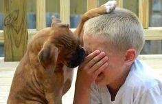 Se non ne eravate ancora sicuri è così, per il vostro cane, siete la creatura più specialeal mondo. Vi ama più di qualunque altra cosa. Ma come ve lo dimostra? Molti suoi atteggiamenti sono riconoscibili, ma eccone qualcuno di cui forse non conoscevate il significato. 1. Quando vi guarda incantato per ore intere. Fonte: @SurvivingMush…