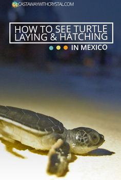 How to see Turtle Egg Laying & Hatching in Mexico - Castaway with Crystal
