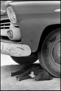 Elliot Erwitt - USA. New Mexico. 1962. °