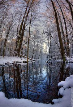 Spandau-Forest