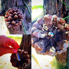 Pine cone cache.  If this was hung in an actual pine tree, it could be a tough find in the fall.  #IBGCp