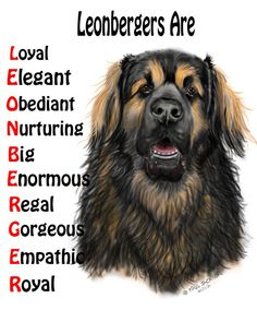 Leonbergers are.....